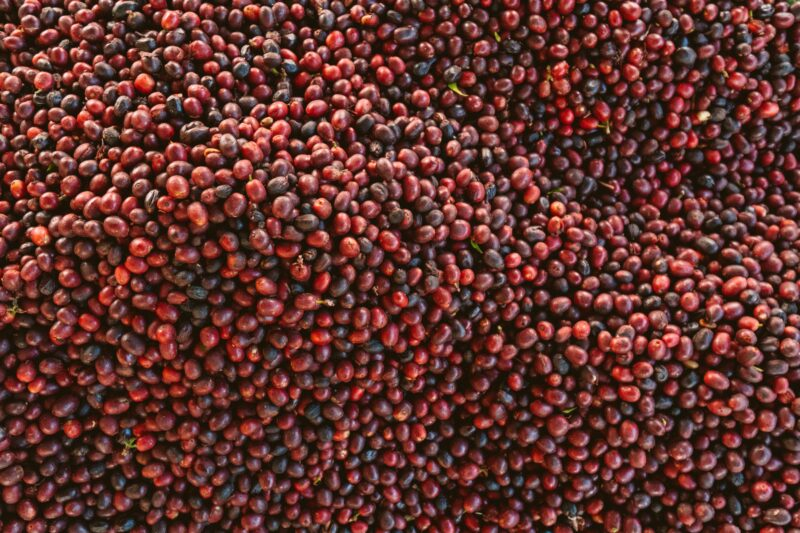 Red Coffee Beans Lot