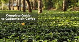 Guatemalan Coffee – Best Brands, History & Facts