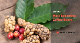 Most Expensive Coffee Varieties – Are They Worth It?