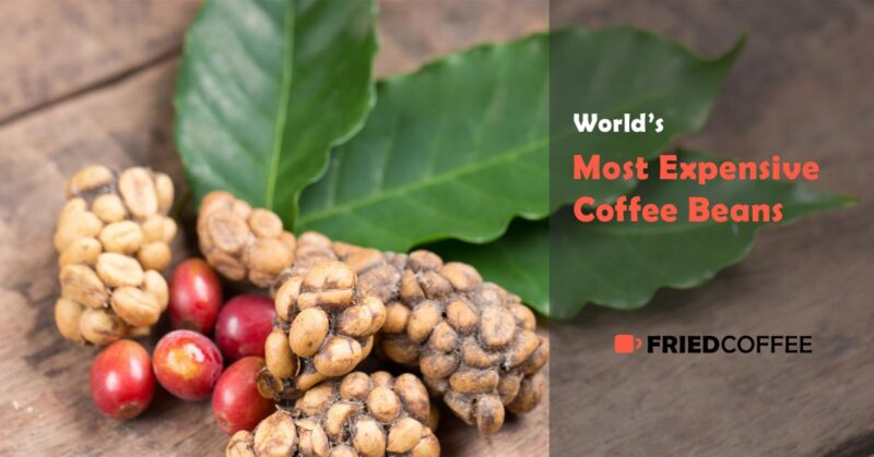 World's Most Expensive Coffee Beans